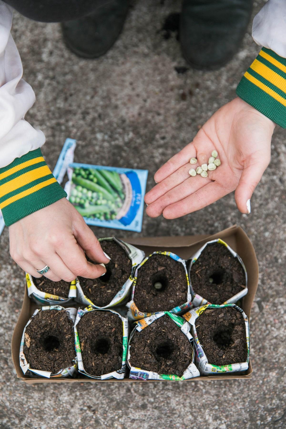 DIY Paper Pots for Garden Seedlings | Vegetable Gardening | Seed Prep | JessicaBrigham.com
