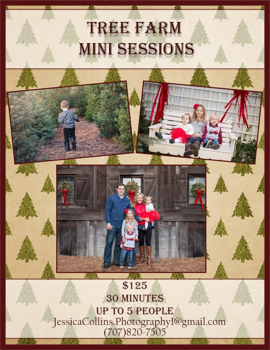 Sonoma County Holiday Family Photographer. Tree Farm Photo Sessions in Santa Rosa Ca