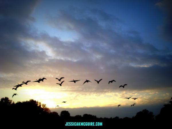 geese flight sunrise watermarked