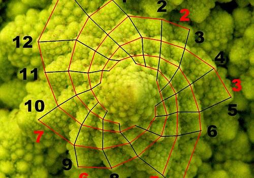 fibonacci cabbage