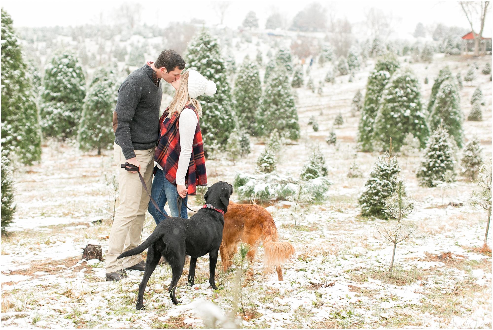 belmont christmas tree farm engagement photography winter engagement snowing