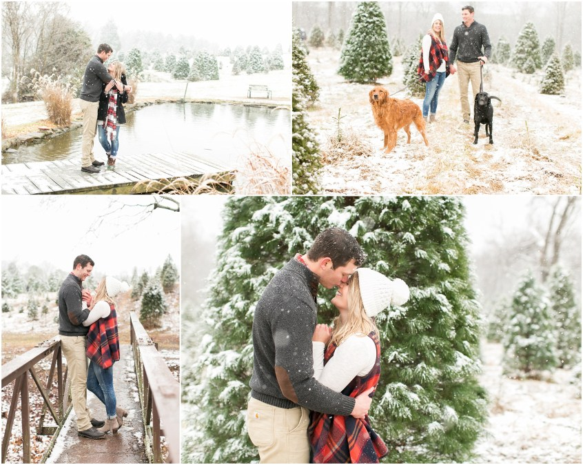 belmont christmas tree farm engagement portrait