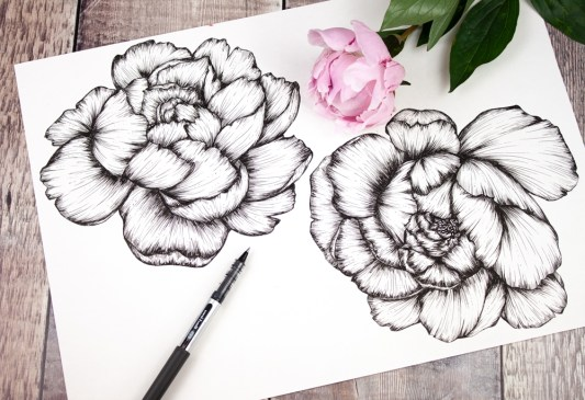 Sketchbook peony drawings by Jessica Wilde ©