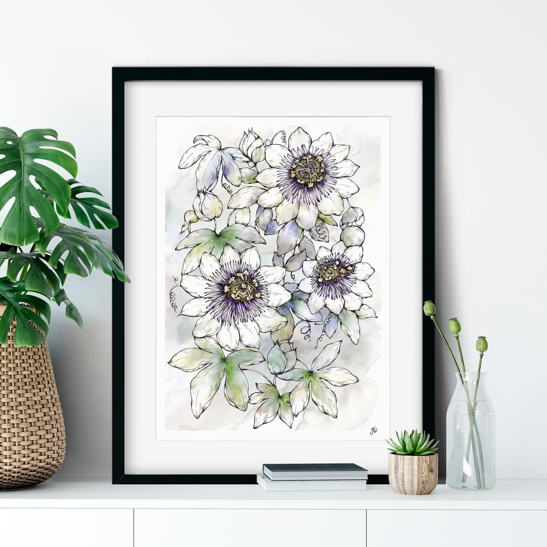 Passion Flower Illustration