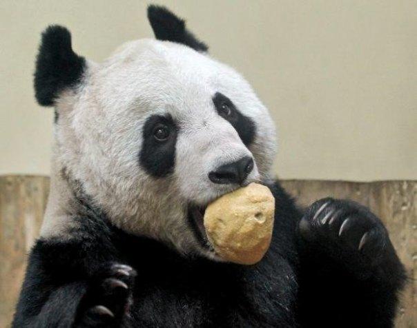 świąteczne obżarstwo panda gruby brzuch jestesmyfajni