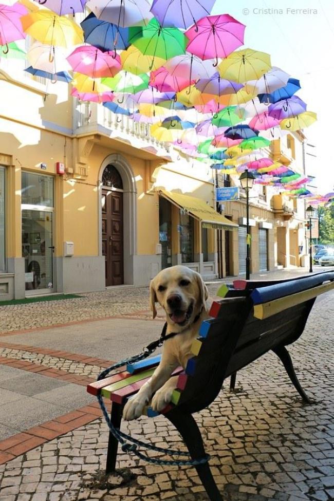 parasolki 11