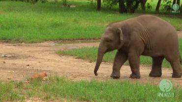 Obserwuj, co się dzieje, gdy słoniątko spotyka kota