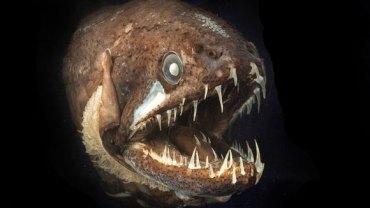 Najbardziej przerażające morskie istoty!
