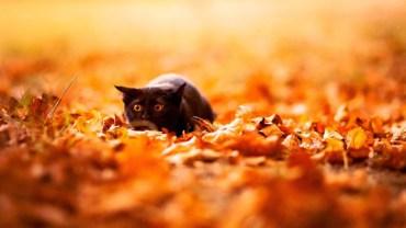 Zachwycające zdjęcia zwierząt w jesiennych sceneriach! To trzeba zobaczyć!