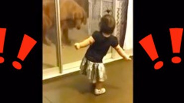 Rodzina wpada w histerię, gdy ta dziewczynka tańczy do swojej ulubionej piosenki!