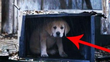 Ten biedny szczeniak wpadł w poważne tarapaty! Trudno uwierzyć w to, co zdarzyło się później!
