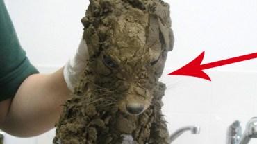 Uratowali tego malucha, kiedy tonął w błocie. Potem go wykąpali… Zobacz, jakiego zwierzaka wyciągnęli z tarapatów!
