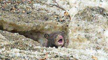 Podróżując samochodem, dostrzegł coś w w skalnej kryjówce. To, co zobaczył, ujęło go za serce!