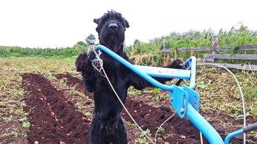 To nie jest zwykły pies! Ten zwierzak ma niesamowite hobby! Zobacz, w jaki sposób pomaga swojemu panu!