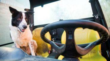 Ten pies zatrzymał ruch na szkockiej autostradzie. Wykorzystał do tego… ciągnik!