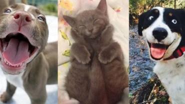 Zobacz najszczęśliwsze zwierzaki na świecie! Te zdjęcia poprawią ci humor na długi czas!