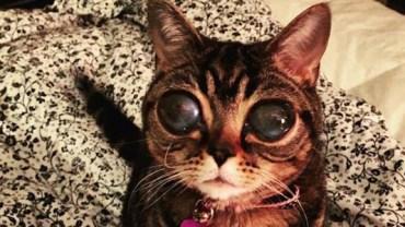 Poznajcie Matyldę - kota, który przybył do nas kosmosu ;)
