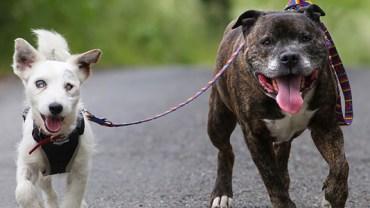 Ten niewidomy pies ma przewodnika, dzięki któremu może normalnie żyć. Jednak los tej dwójki nie jest usłany różami…