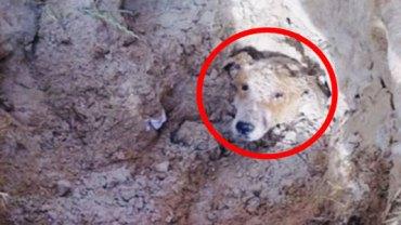 Ten pies został pochowany żywcem w ziemi... Zobaczcie, jak potoczyły się jego losy