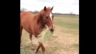 Powód, dla którego ten koń niesie w pysku siano, jest przepiękny… Zobacz, dla kogo się tak poświęca!