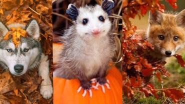 Zwierzęta też kochają jesień!