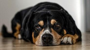 Właścicielka psa po przeczytaniu karteczki przyczepionej do obroży pupila, oniemiała...