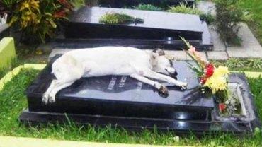 Ten pies od dziewięciu lat o tej samej porze przychodzi na cmentarz, by zasnąć u boku swojego pana