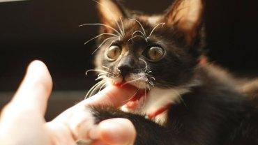 Jeśli kiedykolwiek zobaczysz, że twój kot zachowuje się w ten sposób, powinieneś wiedzieć, że chce ci powiedzieć coś bardzo ważnego