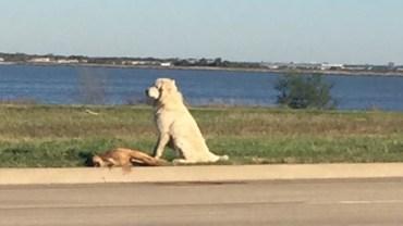 Pies pokazał ludziom, co oznacza prawdziwa miłość i lojalność