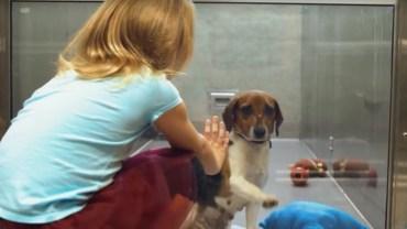 Dziewczynka podeszła do klatki psa i zobaczyła coś, czego nie potrafił dostrzec nikt z dorosłych!