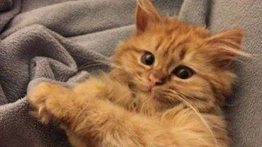 Jeśli brakuje wam pozytywnych wibracji, poznajcie kota, który zawsze jest szczęśliwy