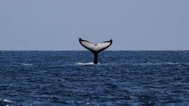 Podwodny świat zwierząt potrafi zaskakiwać. Zobaczcie, jaką niespodziankę mężczyznom na Alasce sprawiła rodzina waleni