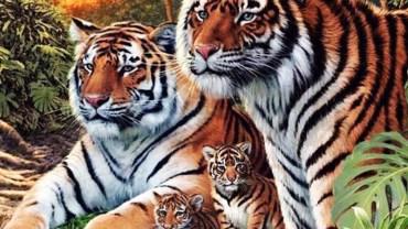Ile tygrysów widzisz na obrazku? Rozwiązanie nie jest wcale takie oczywiste!