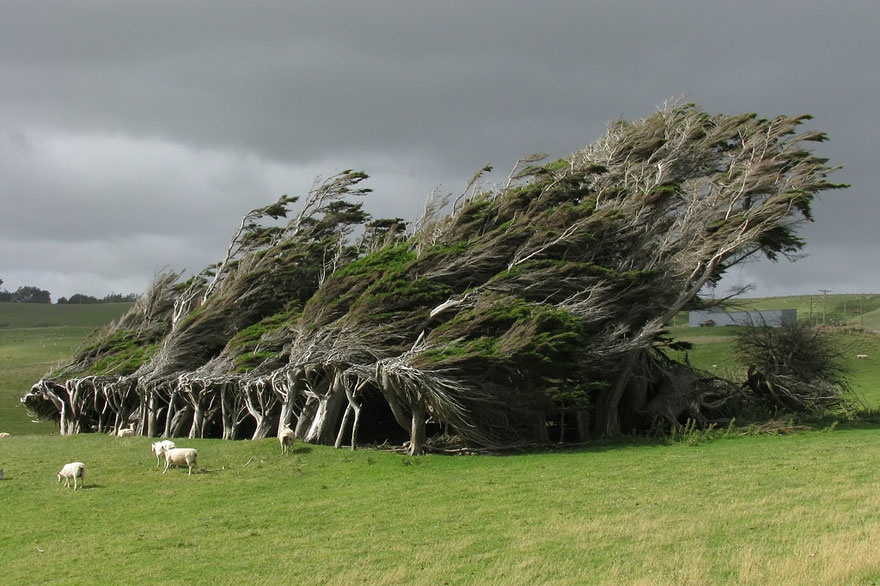 150805-R3L8T8D-880-amazing-trees-18