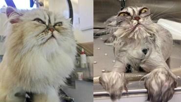 Zwierzęta przed i po kąpieli. One tego nie wybaczą właścicielom!