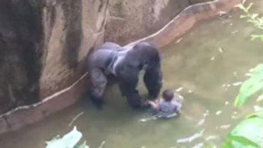 Czteroletni chłopczyk przedostał się na wybieg dla goryli. Aby ratować dziecko, władze ZOO zastrzeliły zwierzę. Czy słusznie?