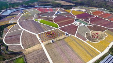 Chiny to nie tylko zatłoczone miasta i fabryki zatruwające środowisko, ale też niezwykłe gospodarstwa zajmujące się hodowlą tulipanów