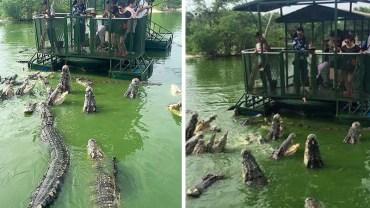 Przerażeni turyści otoczeni przez głodne krokodyle. Ciężko w to uwierzyć, ale dostali się tam na własne życzenie!