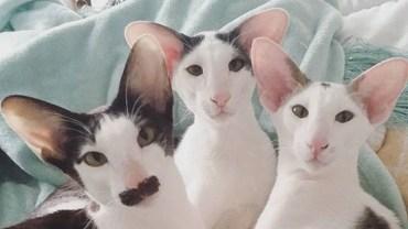 15 kotów, które są zbyt genialne by były prawdziwe