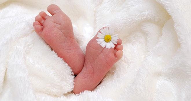 adoption-of-embryos-pas