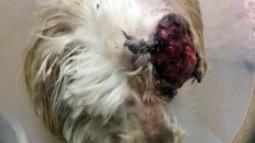 Organizacja uratowała psa, którego inni skazali na śmierć