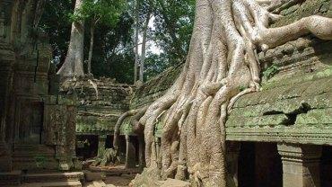 Oto 9 silnych i upartych drzew, które pokazują ulotność ludzkiej cywilizacji względem sił przyrody