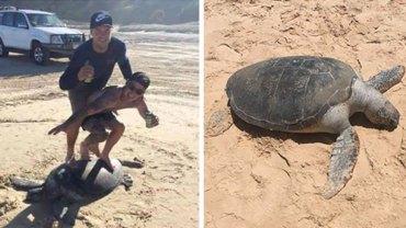 Dwóch Australijczyków, by zrobić fajne zdjęcie na Instagram, dręczyło żółwia leżącego na plaży. Zwierzę nie żyje, a mężczyzn czeka kara