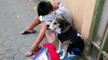 Wyczerpany chłopiec nie miał już sił, żeby żebrać na ulicy. Wtedy jego pies zrobił coś naprawdę pięknego!