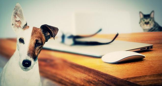 Badania donoszą, że śmierć psa lub kota jest równie bolesna, co utrata członka rodziny, ale miłośnicy zwierząt twierdzą, że jest jeszcze boleśniejsza