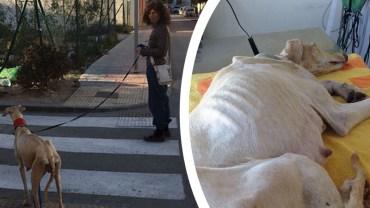 Pies ze złamaną nogą szedł 2 kilometry, by pokazać ludziom, którzy mu pomogli coś znacznie ważniejszego