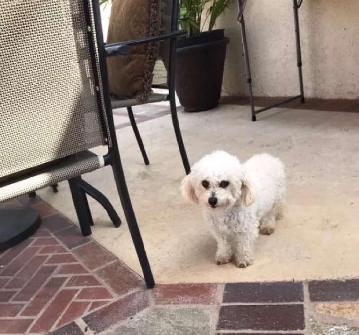 Ta psia mama straciła wszystkie szczenięta. To, co zrobiła właścicielka, aby wyciągnąć ją depresji, wzrusza do łez!