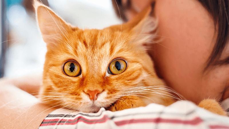 """""""Jedyny dobry dziki kot, to ten ze strzałą wbitą w łeb!"""" - mówi szalona weterynarz po tym, jak zabija kota sąsiada, strzelając do niego z łuku!"""