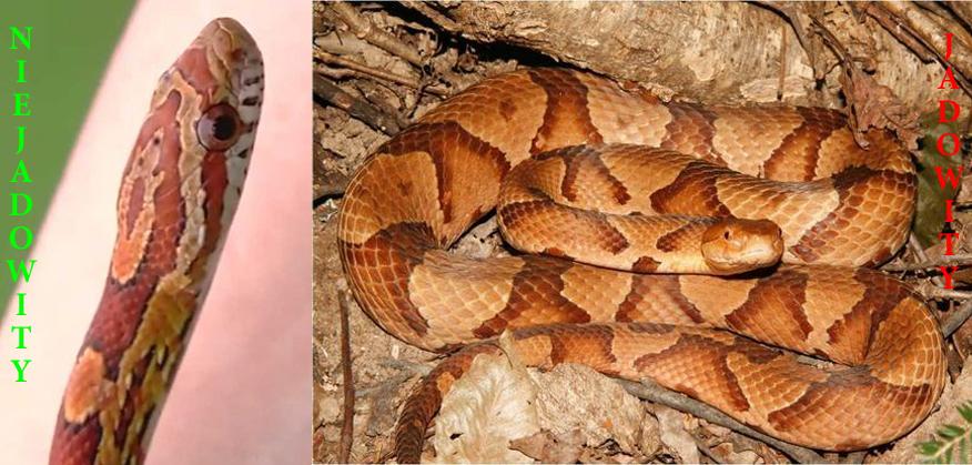 Matka pozwoliła by jej roczną córeczkę ugryzł wąż, bo... chciała dać dziecku życiową lekcję