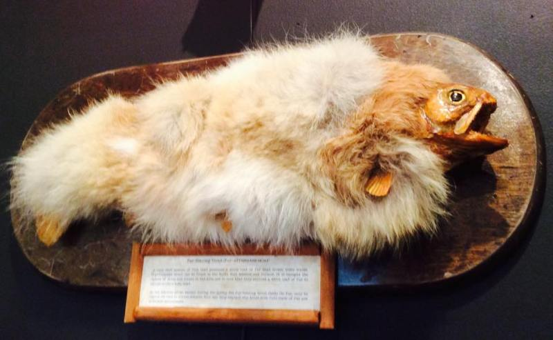 He was fishing when he stumbled upon a specimen covered with fur! The whole internet wonders where this specimen has come from 4